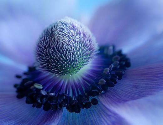 50 de poze splendide cu flori - Poza 10