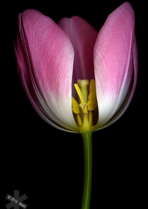 50 de poze splendide cu flori - Poza 11