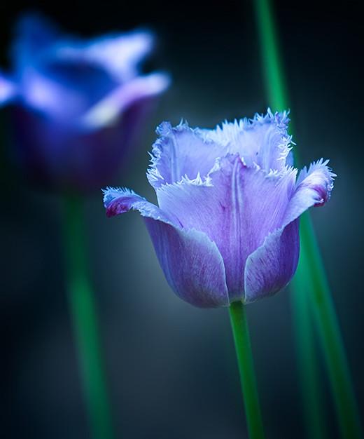 50 de poze splendide cu flori - Poza 13