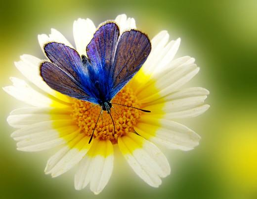 50 de poze splendide cu flori - Poza 14