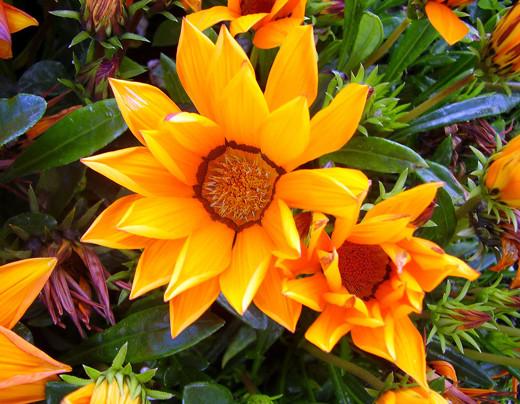 50 de poze splendide cu flori - Poza 4