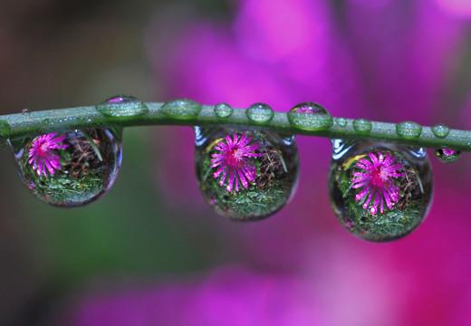 50 de poze splendide cu flori - Poza 16