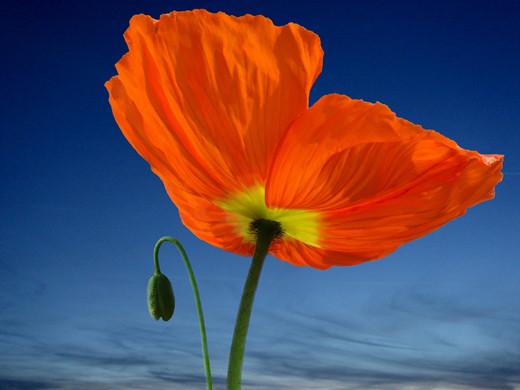 50 de poze splendide cu flori - Poza 18