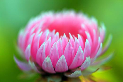 50 de poze splendide cu flori - Poza 19