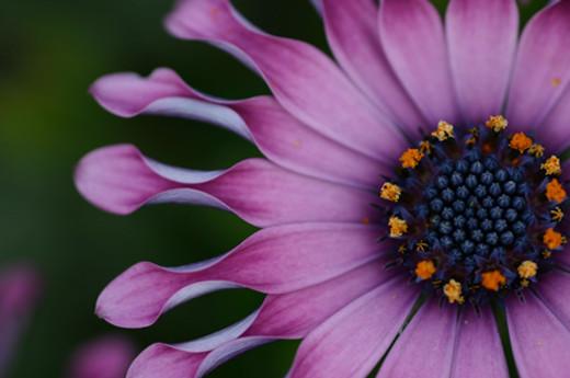 50 de poze splendide cu flori - Poza 20