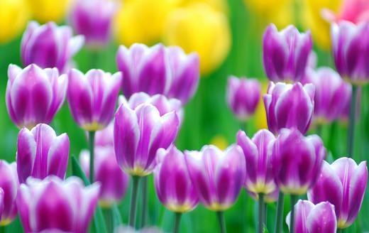 50 de poze splendide cu flori - Poza 21