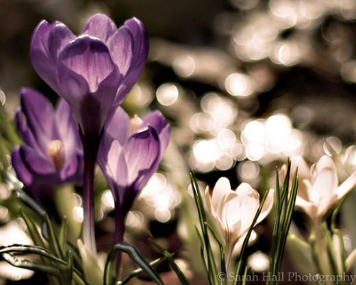 50 de poze splendide cu flori - Poza 22