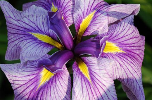 50 de poze splendide cu flori - Poza 23
