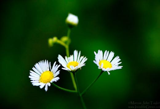 50 de poze splendide cu flori - Poza 24