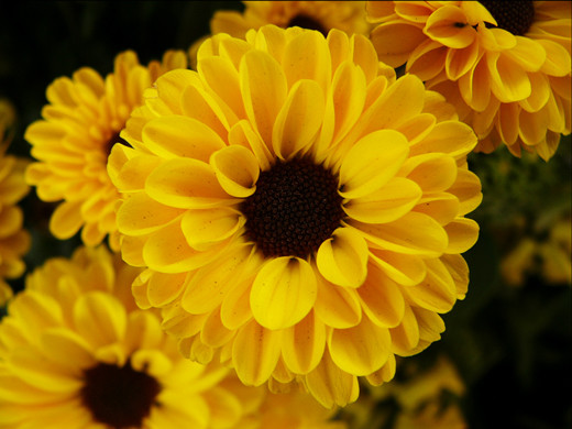 50 de poze splendide cu flori - Poza 25