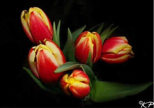 50 de poze splendide cu flori - Poza 26