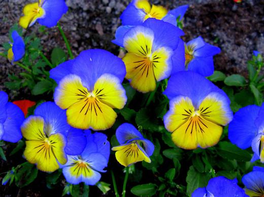 50 de poze splendide cu flori - Poza 27
