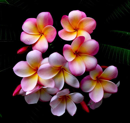 50 de poze splendide cu flori - Poza 28