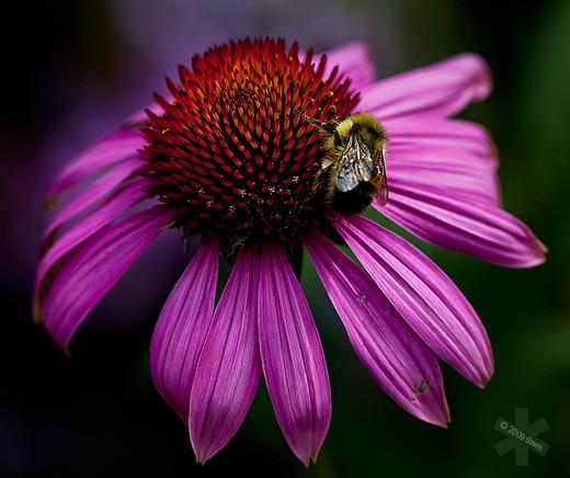 50 de poze splendide cu flori - Poza 5