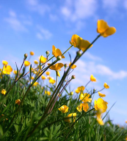 50 de poze splendide cu flori - Poza 29