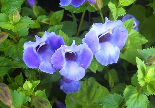 50 de poze splendide cu flori - Poza 30
