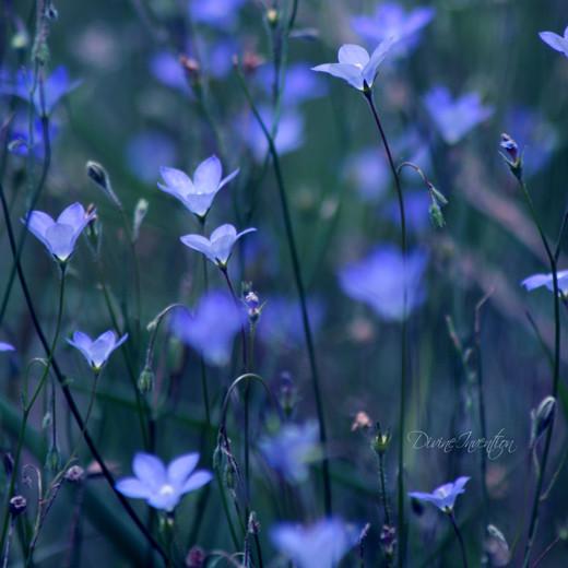 50 de poze splendide cu flori - Poza 31