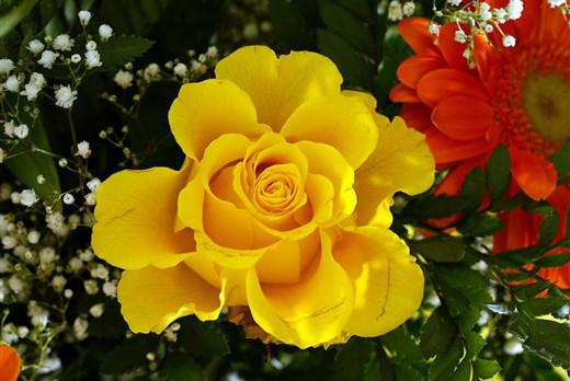50 de poze splendide cu flori - Poza 32