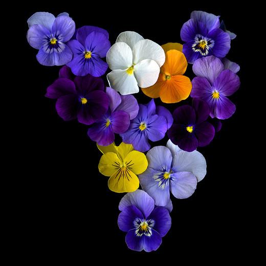50 de poze splendide cu flori - Poza 33