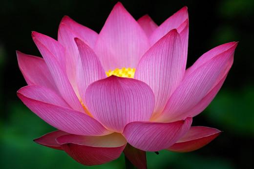 50 de poze splendide cu flori - Poza 34
