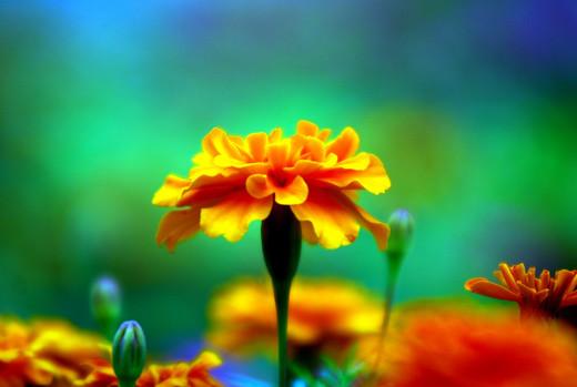 50 de poze splendide cu flori - Poza 35