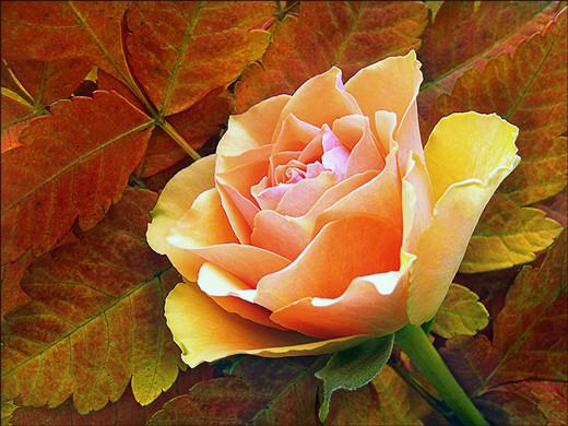 50 de poze splendide cu flori - Poza 37