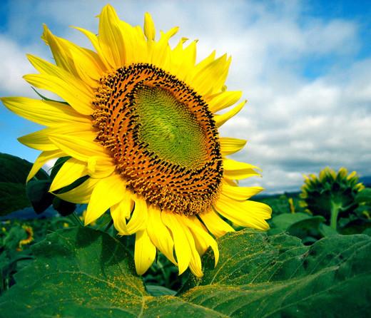 50 de poze splendide cu flori - Poza 38