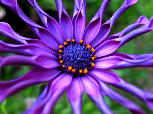 50 de poze splendide cu flori - Poza 39