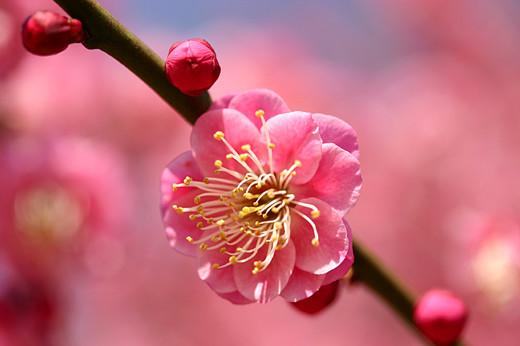 50 de poze splendide cu flori - Poza 1