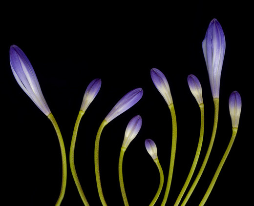 50 de poze splendide cu flori - Poza 42