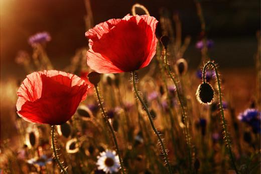 50 de poze splendide cu flori - Poza 43