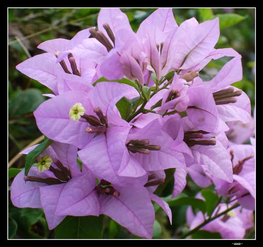50 de poze splendide cu flori - Poza 44