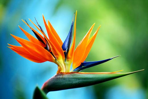50 de poze splendide cu flori - Poza 48
