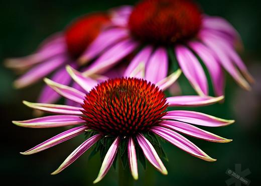 50 de poze splendide cu flori - Poza 9