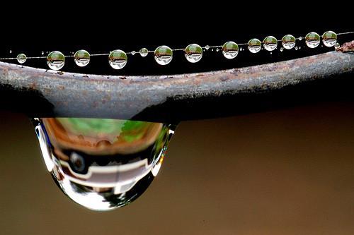 47 imagini cu roua, o splendoare naturala - Poza 26