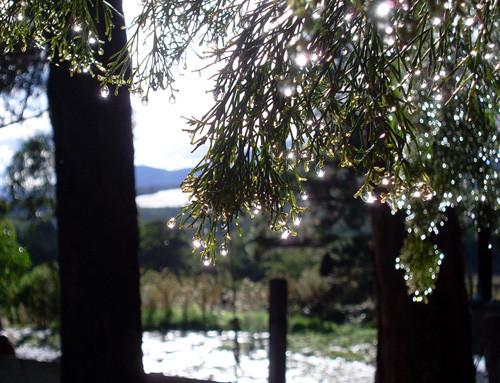 47 imagini cu roua, o splendoare naturala - Poza 28