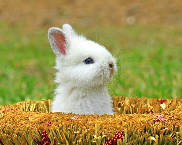 Atentie: Animale simpatice in 45 de poze! - Poza 18
