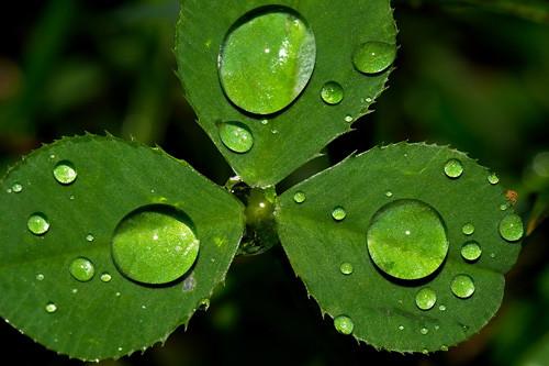 47 imagini cu roua, o splendoare naturala - Poza 30
