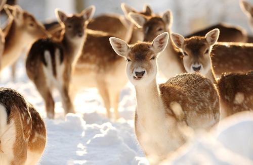 35 de poze: Animale adorabile prin zapada