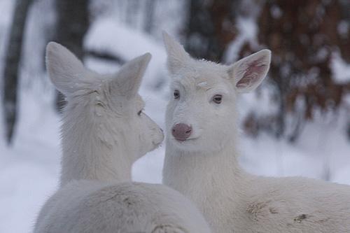 33+1 poze: Animale adorabile prin zapada - Poza 16