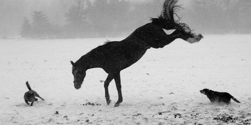 33+1 poze: Animale adorabile prin zapada - Poza 14