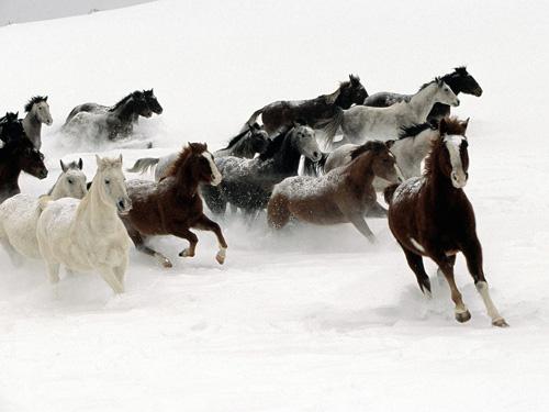 33+1 poze: Animale adorabile prin zapada - Poza 11