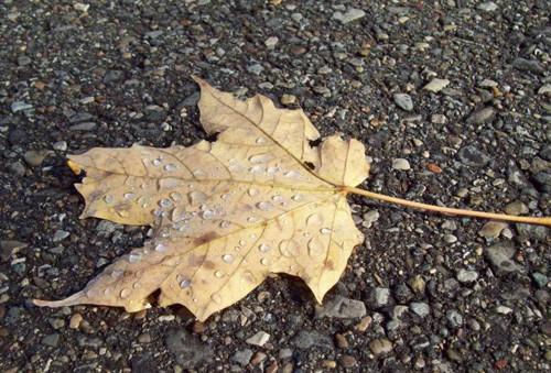 47 imagini cu roua, o splendoare naturala - Poza 31
