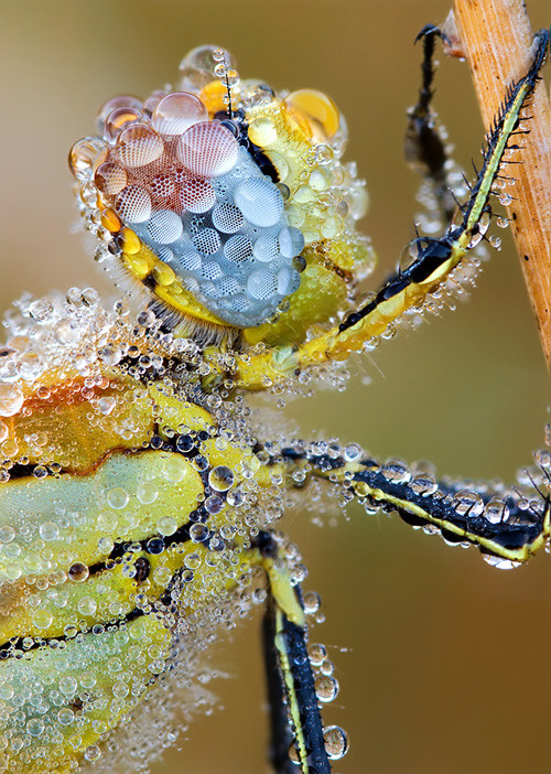 47 imagini cu roua, o splendoare naturala - Poza 32