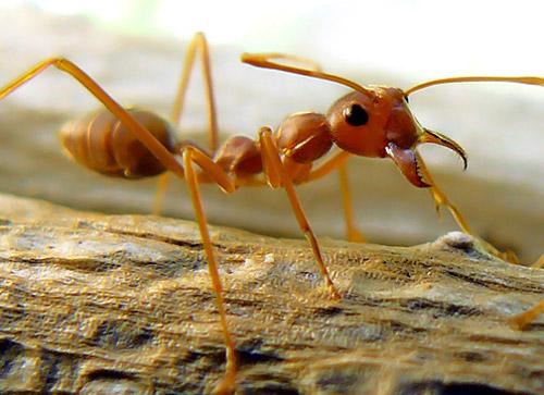 30 de poze cu...insecte! - Poza 25