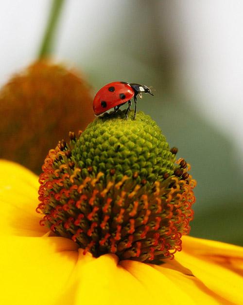 30 de poze cu...insecte! - Poza 3