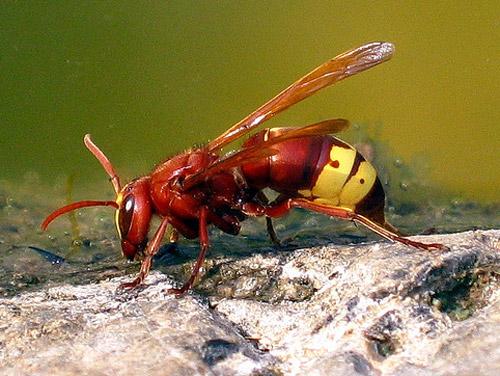 30 de poze cu...insecte! - Poza 24