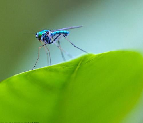 30 de poze cu...insecte! - Poza 4