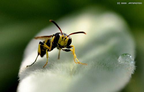 30 de poze cu...insecte! - Poza 30