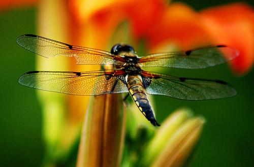 30 de poze cu...insecte! - Poza 6